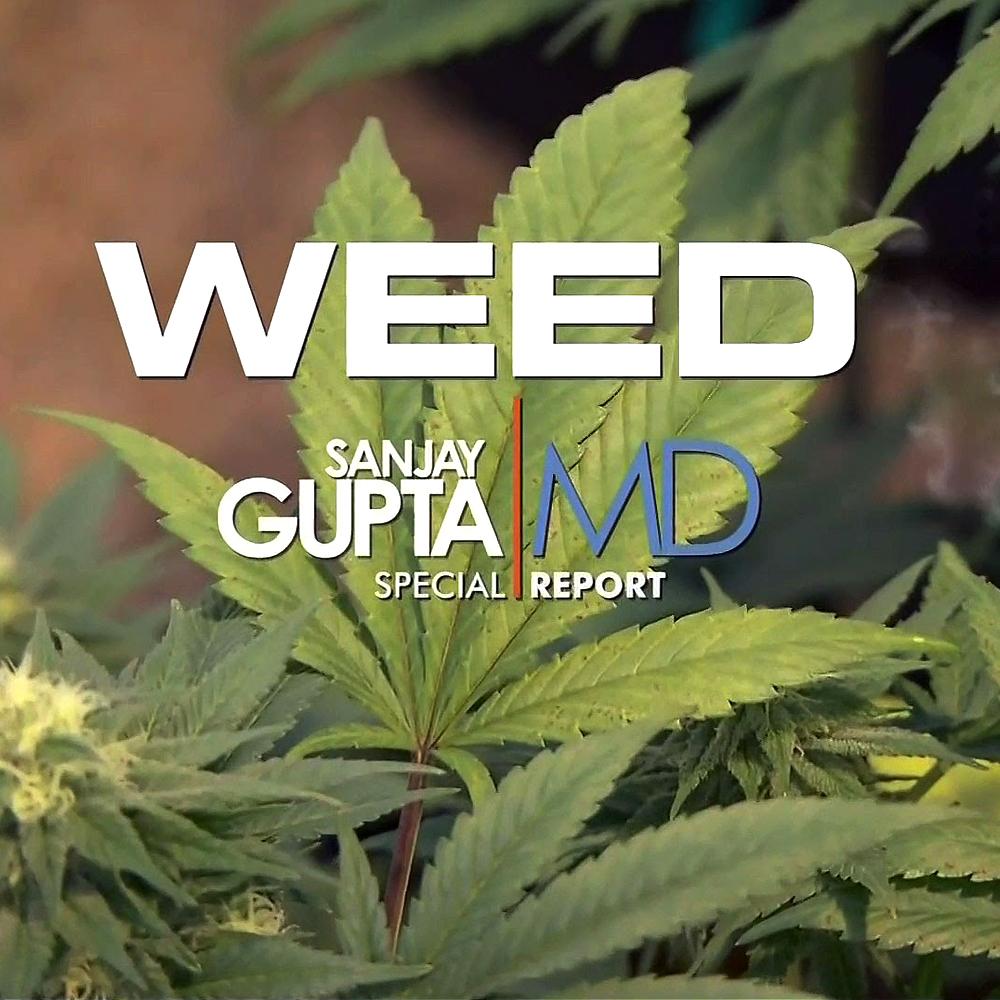 weed documentaraire modern