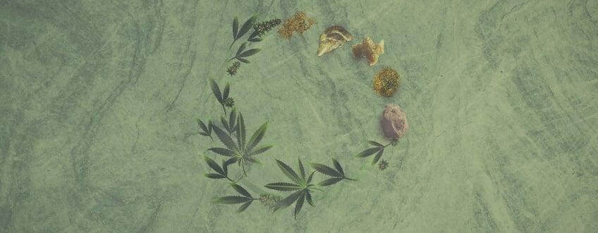 Le guide ultime sur les concentrés de cannabis Royal Queen