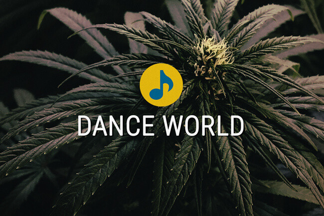 Les graines de cannabis Médicale Dance World