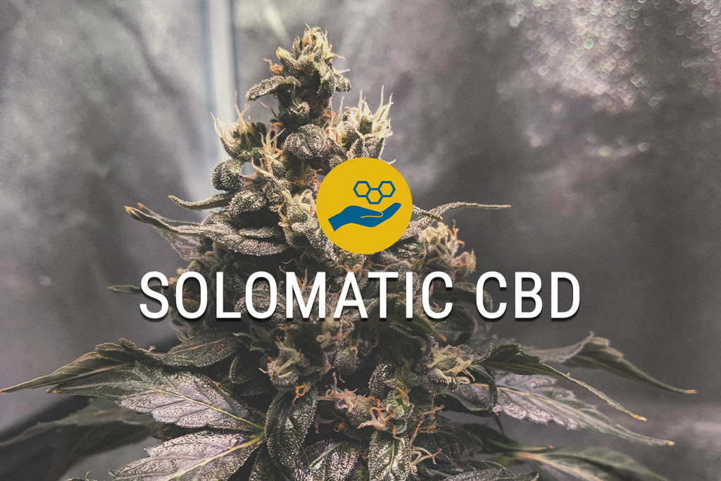 Solomatic CBD Graines de Cannabis Médical