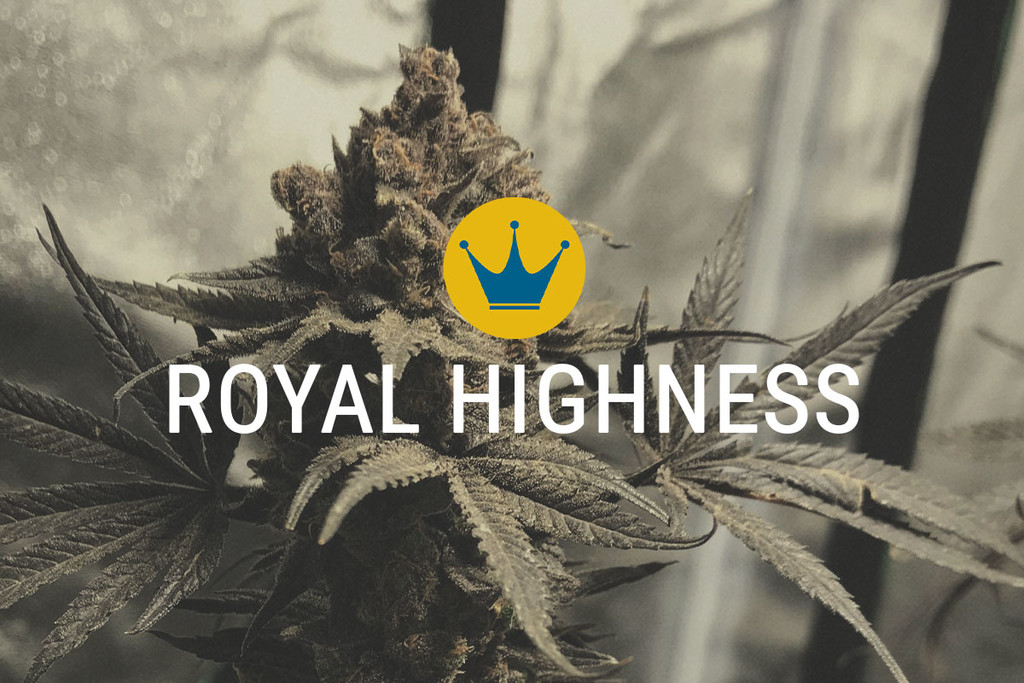 Les graines de Marijuana médicale Royal Highness
