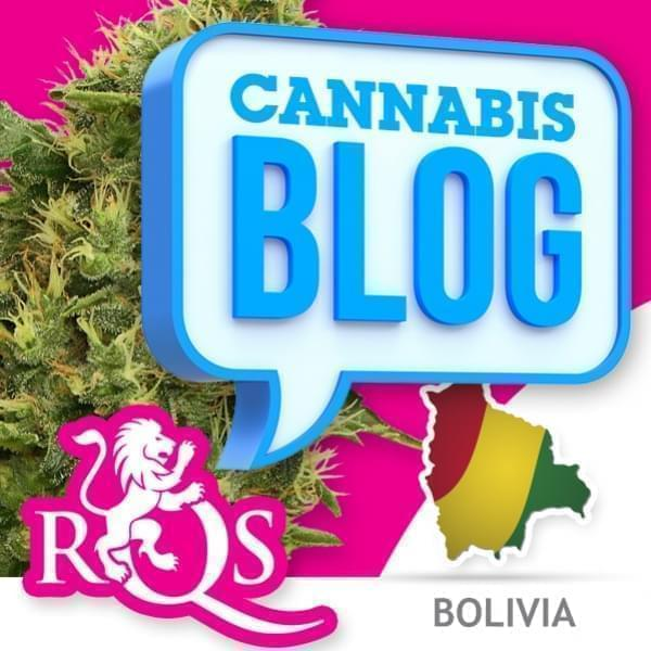 Cannabis en Bolivie