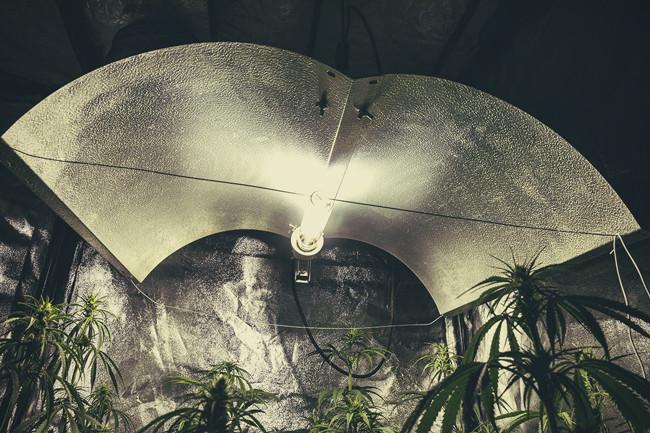 diff rentes types de lampes pour le cannabis avantages et inconv nients rqs blog. Black Bedroom Furniture Sets. Home Design Ideas