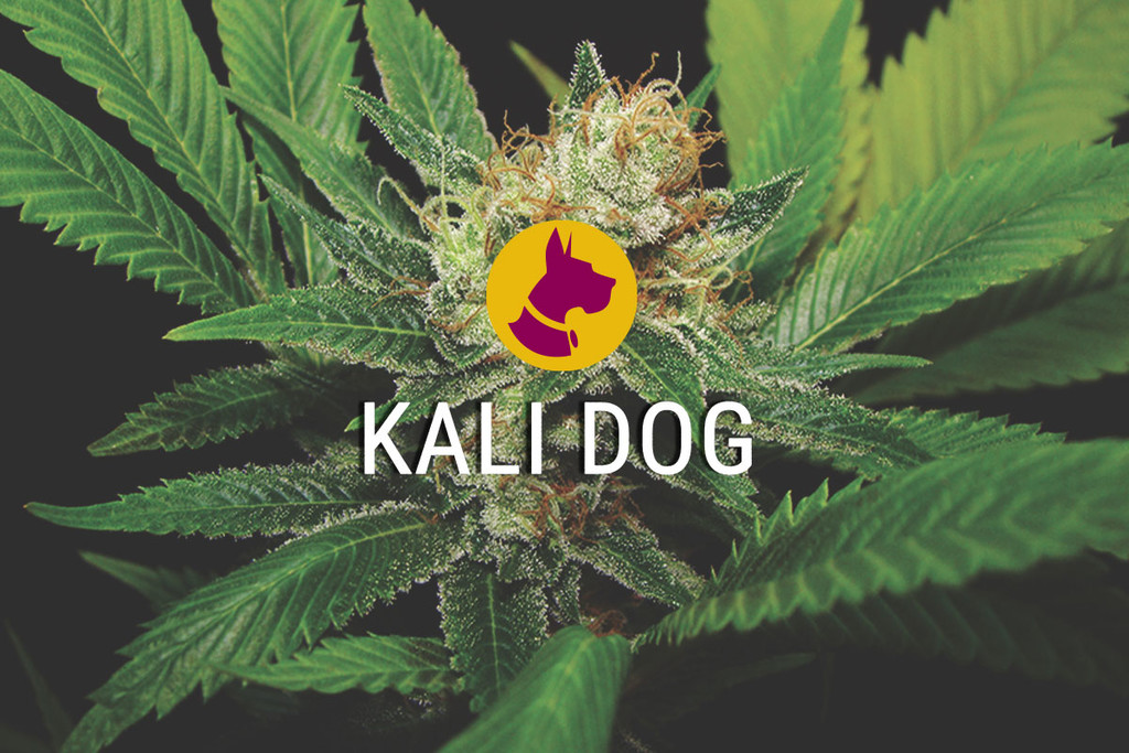 Kali Dog un Chemdawg royale