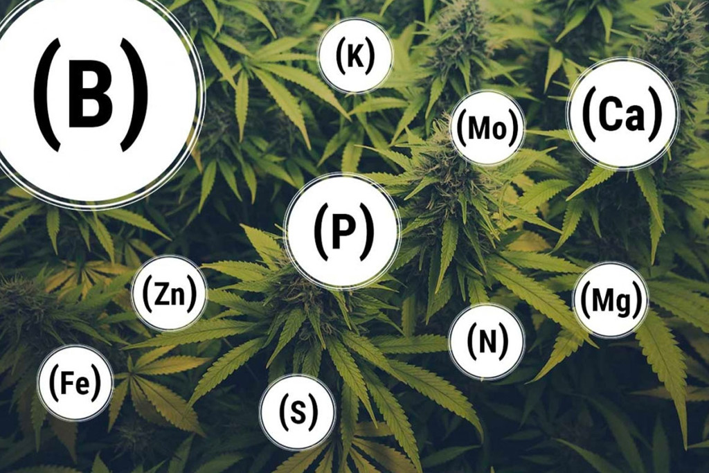 Table des carences nutritive du Cannabis