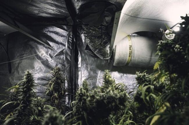 Matériaux Réfléchissants Pour Cultivateurs De Cannabis En ...