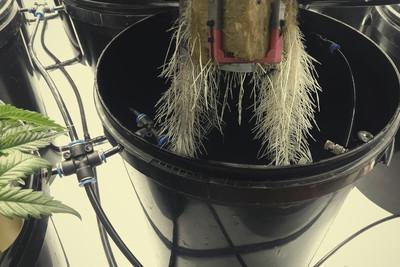 irrigation goutte goutte dans la culture du cannabis rqs blog. Black Bedroom Furniture Sets. Home Design Ideas