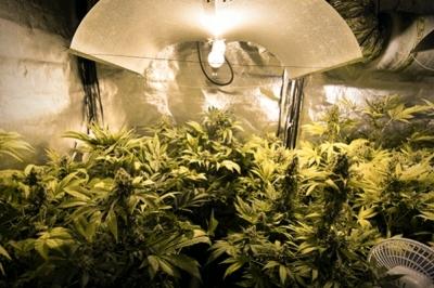 Differentes Types De Lampes Pour Le Cannabis Avantages Et