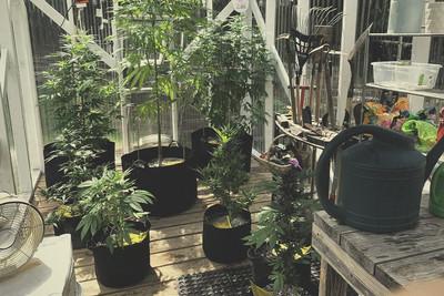Cultiver le cannabis l ext rieur rqs blog - Comment passer en floraison ...